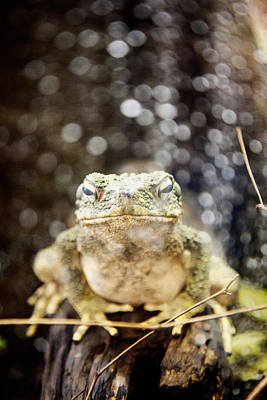 Photograph - Toad by Crystal Cox
