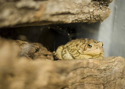 Photograph - Toad In The Hole by Heather Applegate