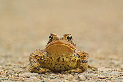 Photograph - Toad Standoff by Joshua McCullough