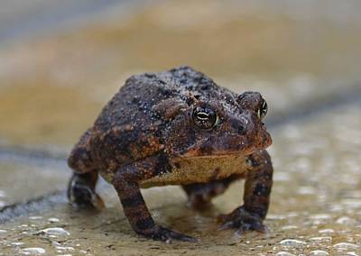Photograph - Toad Takes A Stance by Jeff at JSJ Photography