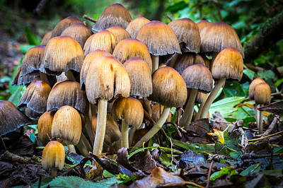 Art Print featuring the photograph Toadstool Family. by Gary Gillette