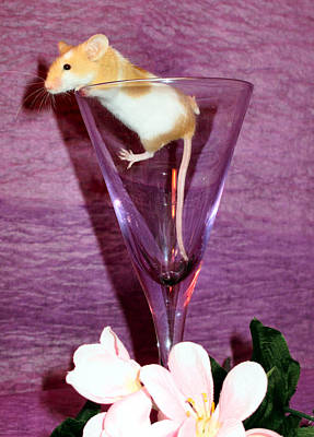Martini Royalty-Free and Rights-Managed Images - Toasting Friends by Art Dingo