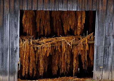 Photograph - Tobacco Barn by Dale  Gurvis