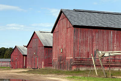 Photograph - Tobacco Barns In Windsor Connecticut by Carol M Highsmith