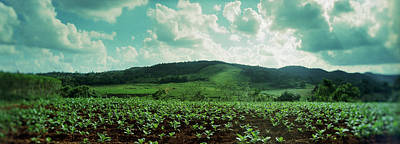 Green Color Photograph - Tobacco Fields In Vinales Valley by Panoramic Images