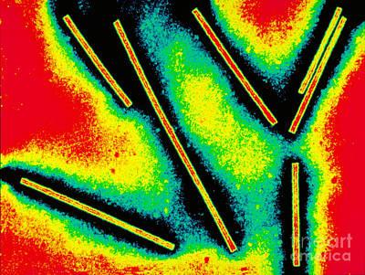 Tobacco Mosaic Virus Art Print by Scott Camazine