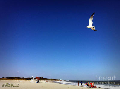 Art Print featuring the photograph Today I Will Soar Like A Bird by Phil Mancuso