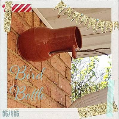 House Photograph - Today We Put Up Our Bird Bottle. We Got by Teresa Mucha