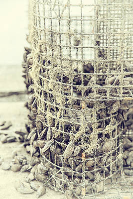 Photograph - Todays Catch by Karol Livote