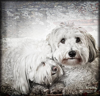 Cute Puppy Photograph - Together by Elena Elisseeva