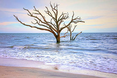 Edisto Island Photograph - Together Until The End by Daniela Duncan