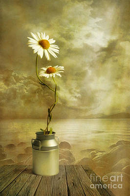 Daisies Digital Art - Together by Veikko Suikkanen