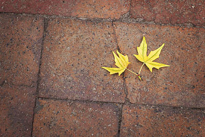 Photograph - Together Yellow Maple Leaves by Terry DeLuco