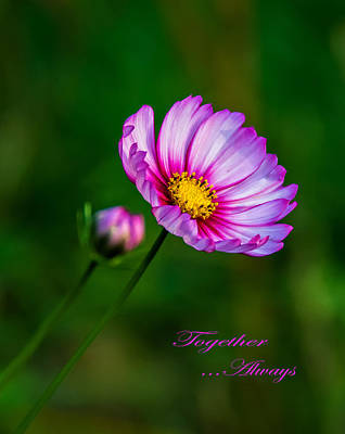 Floral Photograph - Together...always 2 by Steve Harrington