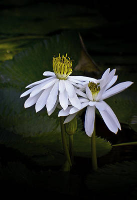 Lily Pads Photograph - Togetherness by Holly Kempe