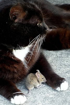 Photograph - Tom And Jerry by Guy Pettingell