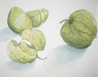 Tomatillos Art Print by Maria Hunt