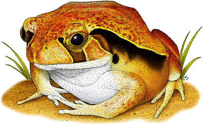 Photograph - Tomato Frog by Roger Hall
