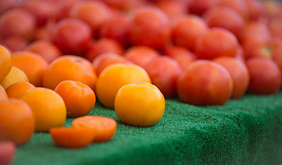 Photograph - Tomato Hues by Matthew Onheiber