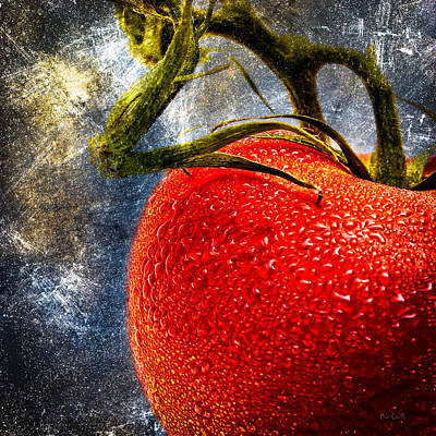 Photograph - Tomato On A Vine by Bob Orsillo