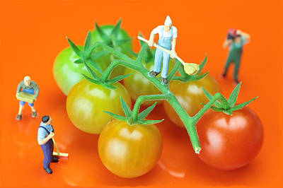 Painting - Tomato Planting Little People On Food by Paul Ge