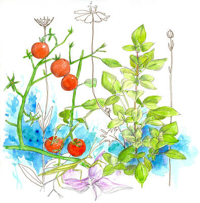 Tomato Drawing - Tomatoes And Basil by Cathie Richardson