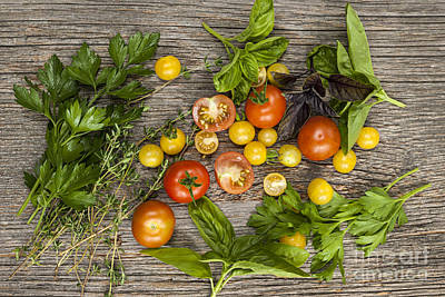 Tomatoes And Herbs Art Print by Elena Elisseeva