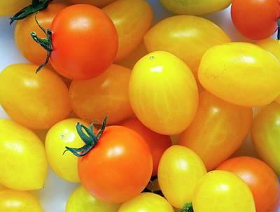 Solanum Lycopersicum Photograph - Tomatoes 'ildi' And 'orange Paruche' by Ian Gowland