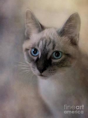 Blue Eyes Photograph - Tomcat by Priska Wettstein