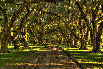 Photograph - Tomotley Plantation Historic Live Oaks  by Reid Callaway
