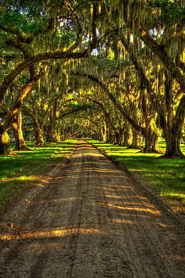 Photograph - Live Oaks Of Tomotley Plantation by Reid Callaway