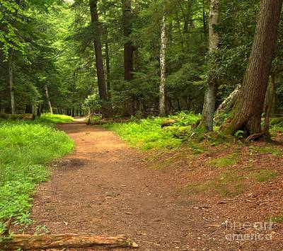 Photograph - Toms Run Trail by Adam Jewell