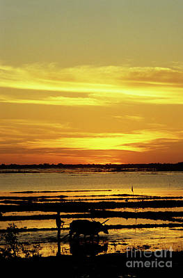 Photograph - Tonle Sap Sunrise 02 by Rick Piper Photography