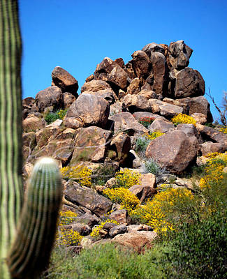 Jerry Sodorff Royalty-Free and Rights-Managed Images - Tonto Saguaro Rocks 10189 by Jerry Sodorff