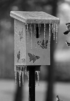 Too Cold For Bluebirds In Black And White Original by Suzanne Gaff