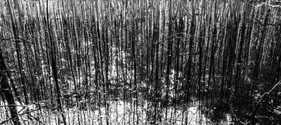 Nature Photograph - Toothpick Forest by Crystal Wightman