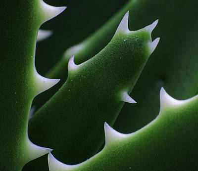 Photograph - Toothy Cactus by B.e. Mcgowan Photography