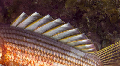 Photograph - Top Fin Design by Jean Noren