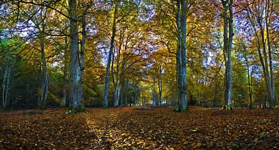 Photograph - Top Of Reelig Glen In Autumn by Joe MacRae