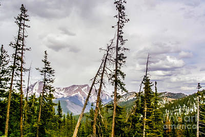 Nature  - Top Of The Rockies by Gib Martinez