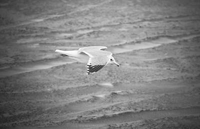 Photograph - Top Secret Seagull Drone by Rich Collins