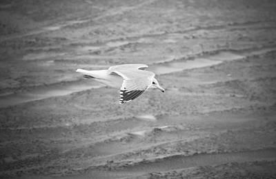 Photograph - Top Secret Seagull Drone by Rich Collins