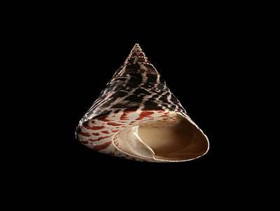 Top Snail Shell Art Print by Gilles Mermet