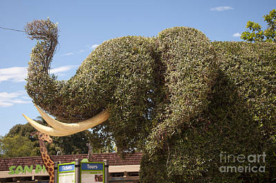 Topiary Elephant Art Print