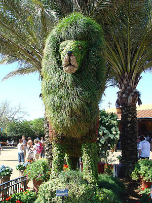 Photograph - Topiary Lion by David Nicholls