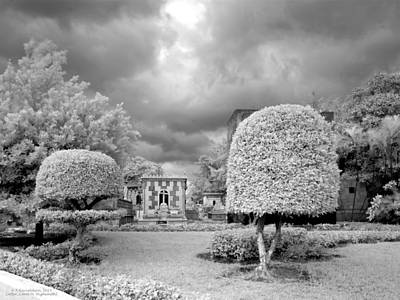 X-ray Photograph - Topiary by Terry Reynoldson