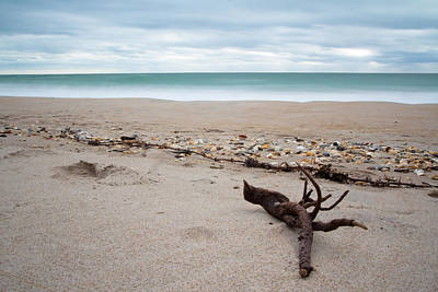 Topsail Island Driftwood Art Print by Shane Holsclaw