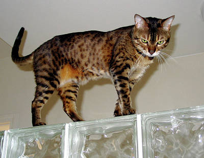 Photograph - Tora On Glass II by Phyllis Kaltenbach