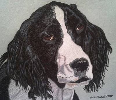 Drawing - Torch- English Springer Spaniel Commission by Anita Putman