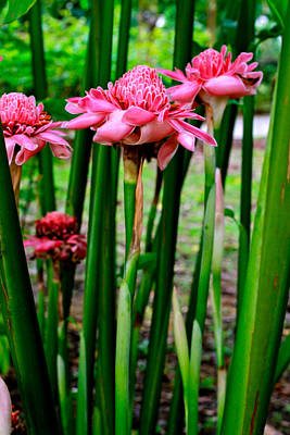 Photograph - Torch Ginger Singapore Flower. Happy Easter by Donald Chen